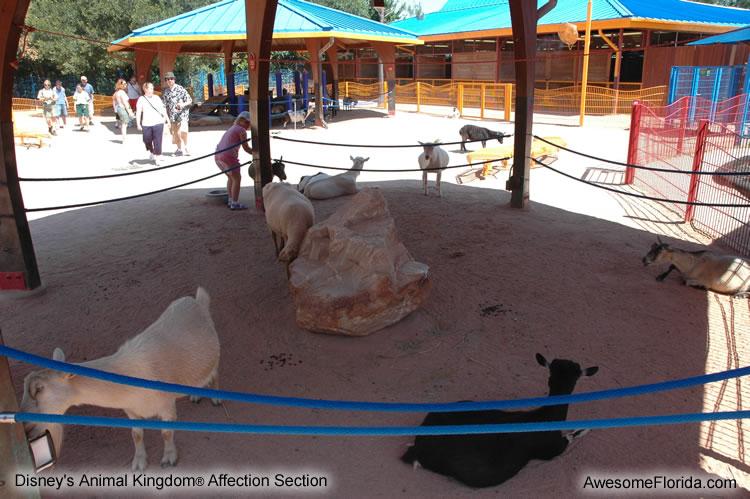 animal-kingdom-1b.jpg