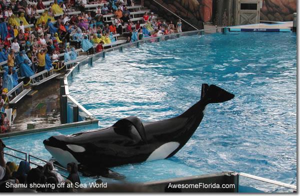 Discount Seaworld Tickets Orlando Florida Html Autos Weblog